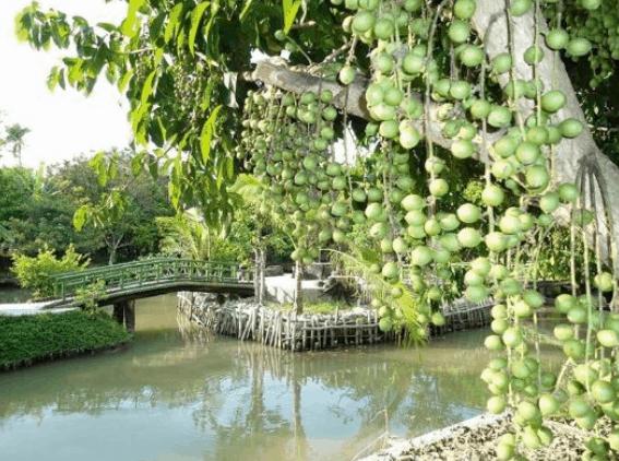 Vẻ đẹp của vườn sinh thái Bảo Gia Trang Viên (Ảnh ST)