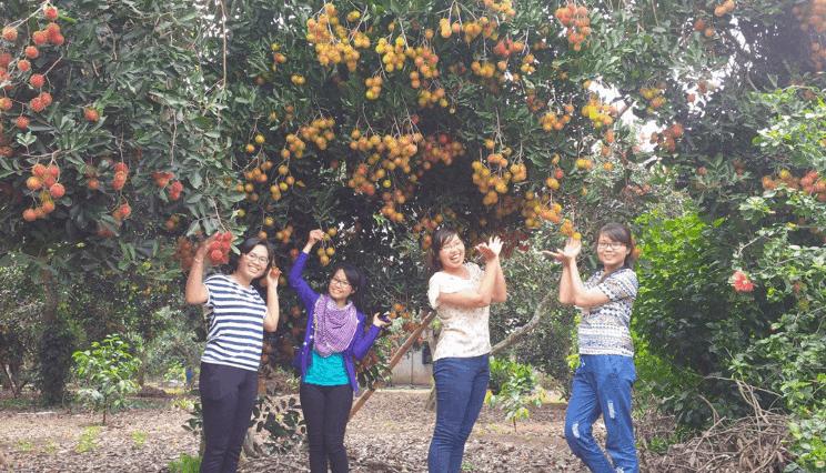 Vườn trái cây 9 Hồng (Ảnh ST)