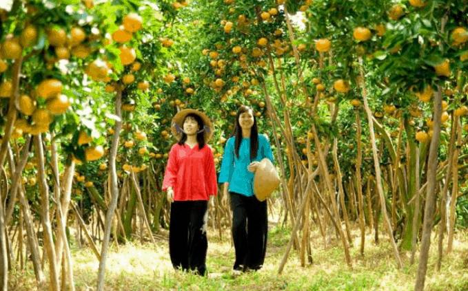 Vườn trái cây ở khu du lịch (Ảnh ST)
