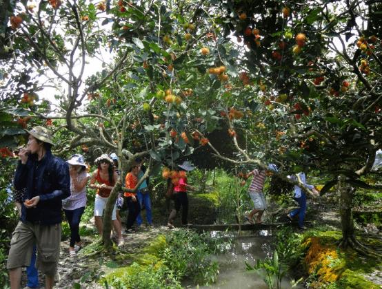 Vườn trái cây thơm ngon ở khu du lịch (Ảnh ST)