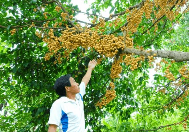 Trái cây thơm ngon ở khu du lịch Vàm Xáng (Ảnh ST)