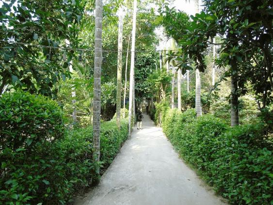 Khung cảnh bình dị của vườn trái cây Vàm Xáng (Ảnh ST)