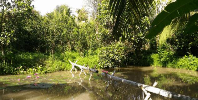 Cầu khỉ (Ảnh ST)