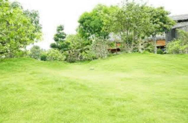 Cây cối ở Bảo Gia Trang Viên (Ảnh ST)