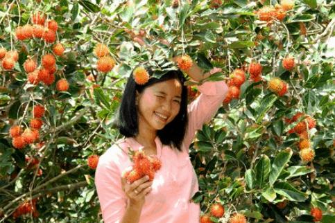 Vườn trái cây ở Phong Điền (Ảnh ST)