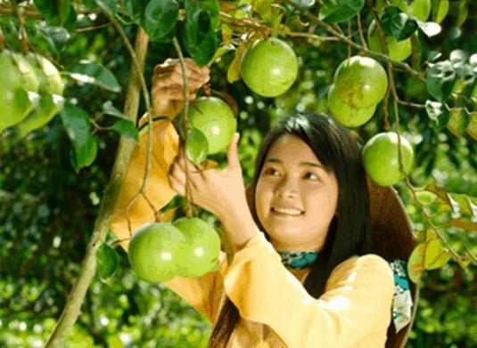 Trái cây ở Phong Điền (Ảnh ST)
