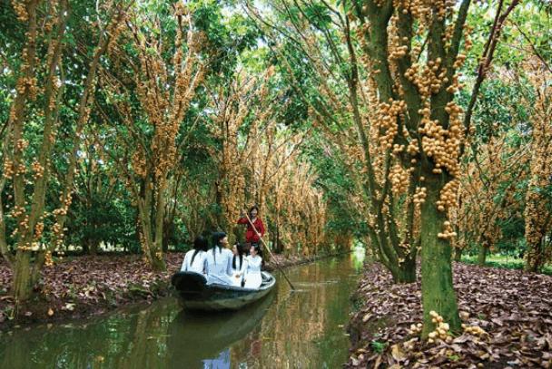 Chèo thuyền qua kênh rạch ở Cần Thơ (Ảnh ST)