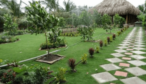 Vẻ đẹp của vườn sinh thái Hoa Súng (Ảnh ST)