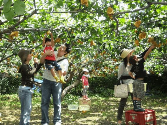 Vườn trái cây trong khu du lịch Ba Láng (Ảnh ST)