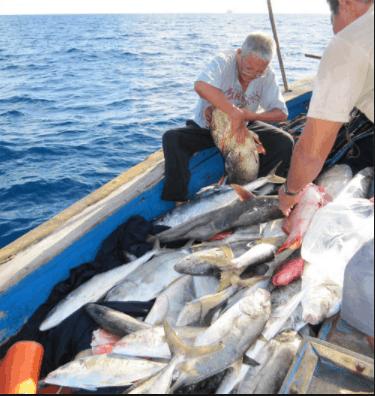 Chiến lợi phẩm sau chuyến câu trên biển