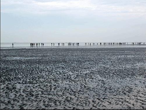 Biển Cần Giờ nhiều phù sa nên hải sản nhiều và tươi ngon