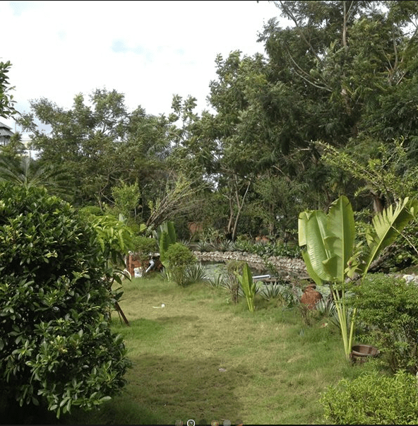Không gian xanh của resort
