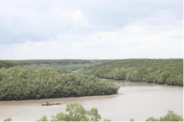 Hệ thống rừng ngập mặn ở Cần Giờ