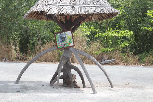 Đảo Khỉ - địa điểm du lịch dành cho du khách