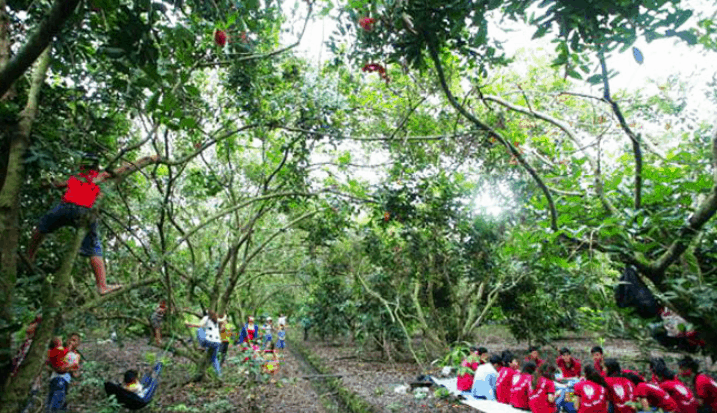 Khung cảnh của vườn trái cây Vàm Xáng (Ảnh ST)