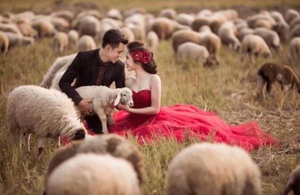Bộ ảnh cưới tuyệt đẹp và ấn tượng bên đàn cừu
