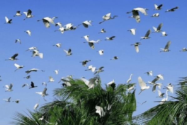 Chiêm ngưỡng hình ảnh đàn cò bay tại vườn cò Thủ Đức