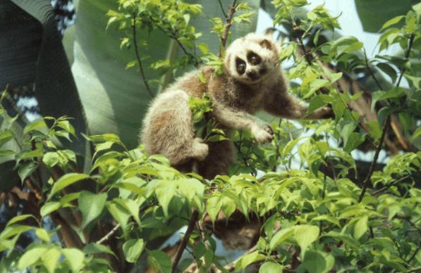 Có nhiều loài động vật quý hiếm tại rừng Cần Giờ