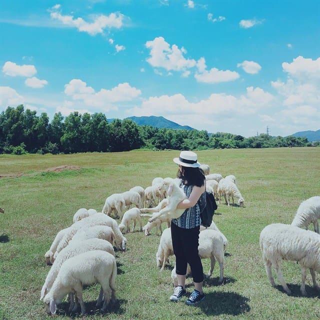 Du khách thoải mái chụp ảnh sống ảo tại trại cừu