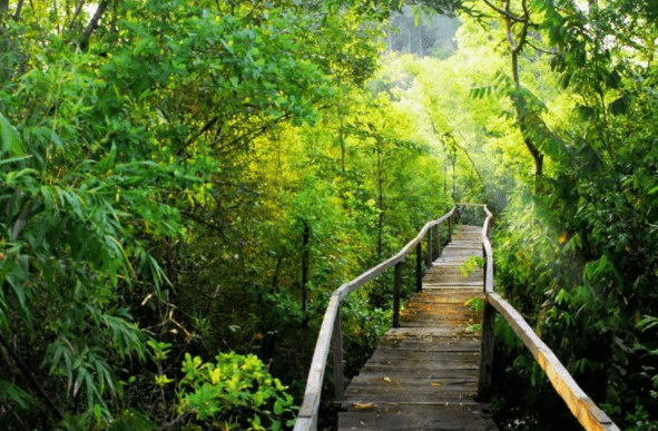 Con đường mòn đi xuyên rừng Nam Cát Tiên