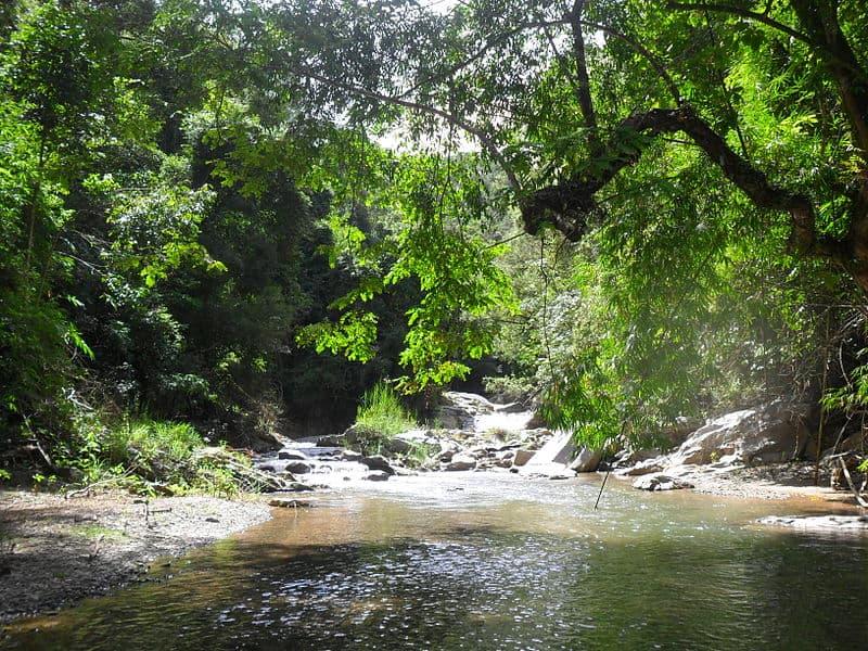 Những dòng suối chảy róc rách và âm thanh gió đưa qua kẽ lá sẽ cuốn đi hết ưu lo (Ảnh: ST)