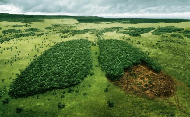 Hãy bảo vệ rừng ngập mặn Cần Giờ - Lá phổi xanh của thành phố