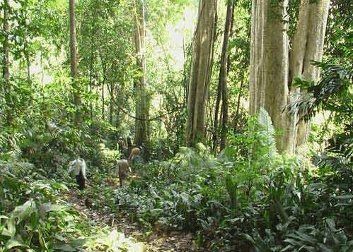 Hệ thực vật phong phú, đa dạng