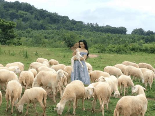 Hình ảnh du khách check-in tại trại cừu Vũng Tàu