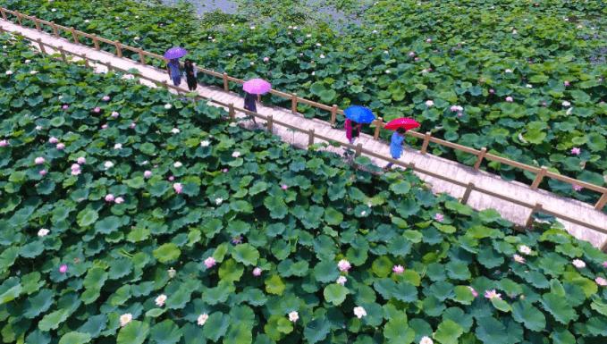 Hình ảnh du khách chiêm ngưỡng cảnh đẹp tại đầm sen Tam Đa