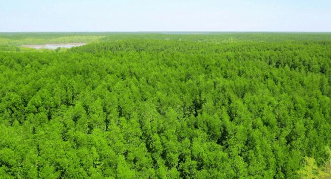 Hình ảnh rừng Cần Giờ sau khi được khôi phục