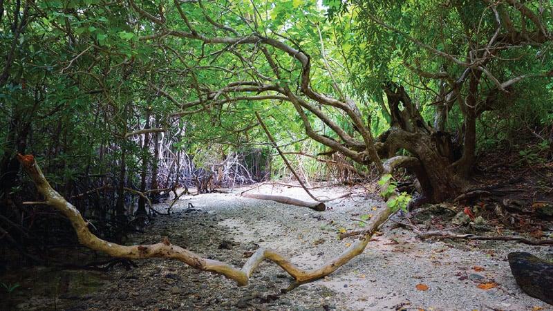 Hệ thống rừng trên đảo