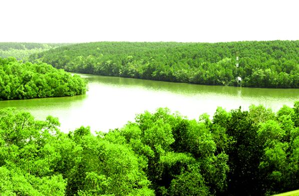 Khung cảnh thiên nhiên ở khu du lịch rừng Cần Giờ