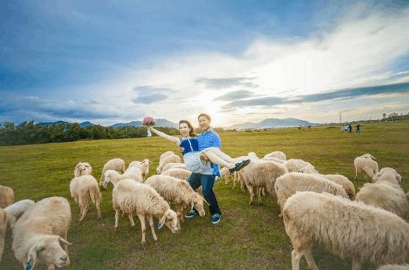 Khung cảnh tuyệt đẹp tại nông trại cừu Vũng Tàu