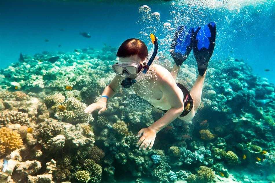 Lặn biển ngắm san hô là trải nghiệm bạn chắc chắn nên thử khi đến thăm hòn Bảy Cạnh