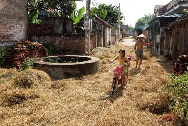 Ngày mùa ở làng Đường Lâm