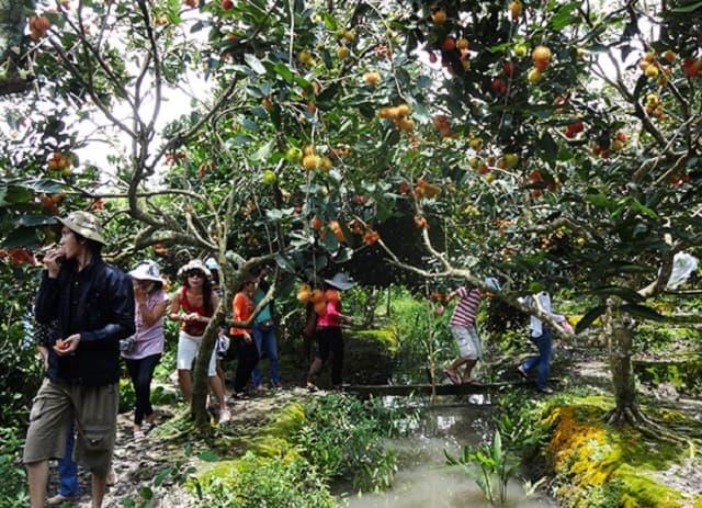 Du khách tham quan tại vườn cây trái làng Đại Bường (Ảnh: Sưu tầm)
