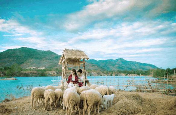 Một bức ảnh ấn tượng tại trại cừu Vũng Tàu