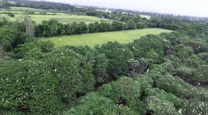 Ngắm đàn cò tại khu du lịch vườn cò quận 9