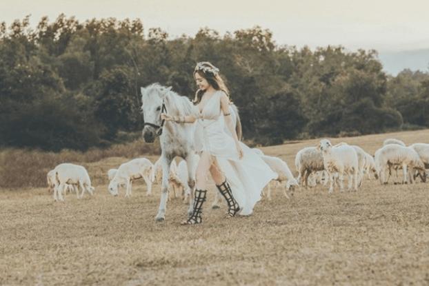 Tạo ấn tượng với chú ngựa trắng tại nông trại cừu Vũng Tàu