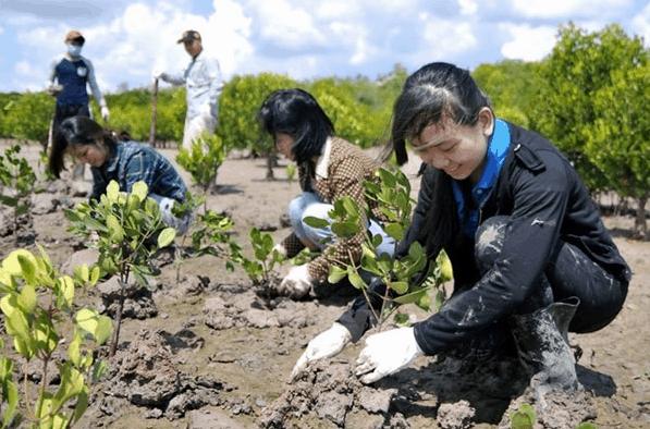 Tích cực bảo vệ rừng ngập mặn Cần Giờ