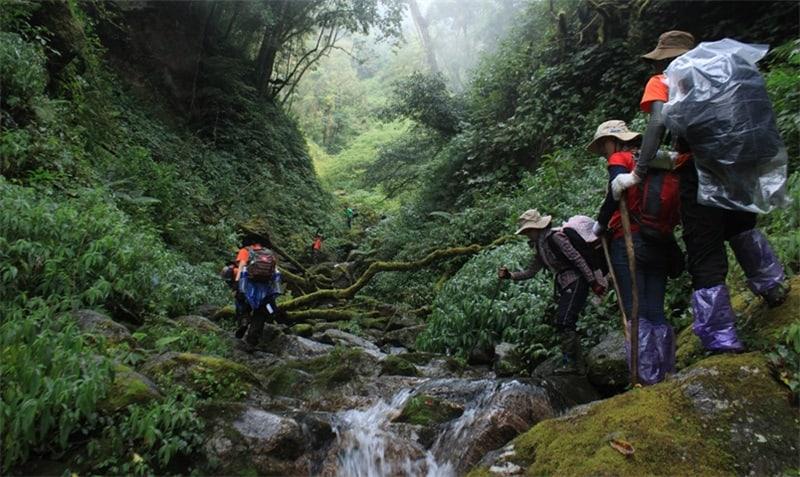 Ảnh chụp đường đi lên đỉnh núi Ngọc Linh. (Ảnh ST)