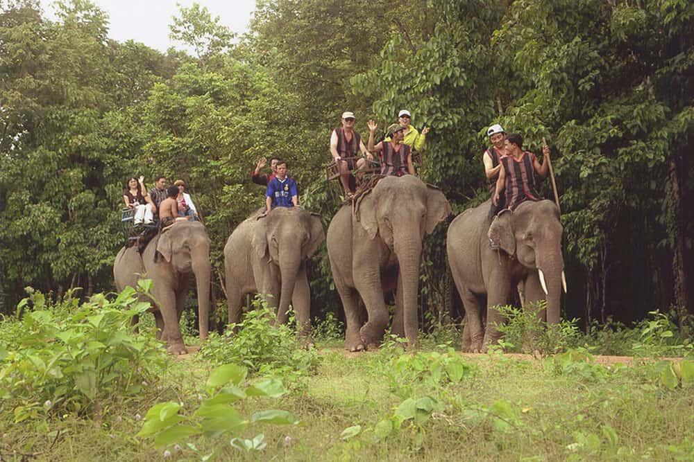 Ảnh chụp những chú voi ở Vườn quốc gia Yok Đôn. (Ảnh ST)