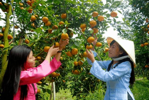 Trái cây ở vườn trái cây Mỹ Khánh (Ảnh ST)