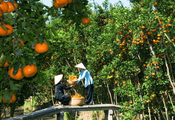 Vẻ đẹp của vườn trái cây Mỹ Khánh (Ảnh ST)