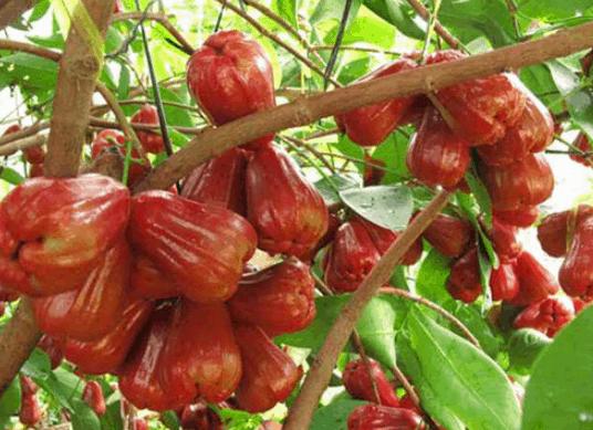 Trái cây tươi ngon (Ảnh ST)