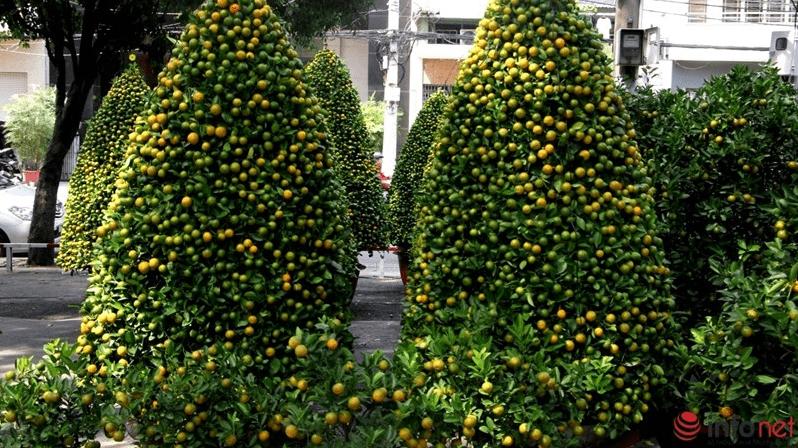 Những cây quất trĩu quả, cắt tỉa đẹp đã bày bán ở công viên 23/9