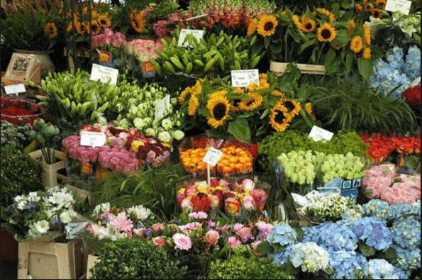 Mỗi loài hoa mang một ý nghĩa riêng
