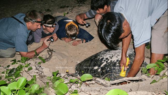 Xem rùa đẻ trứng là một hoạt động thú vị nhất ở Côn Đảo