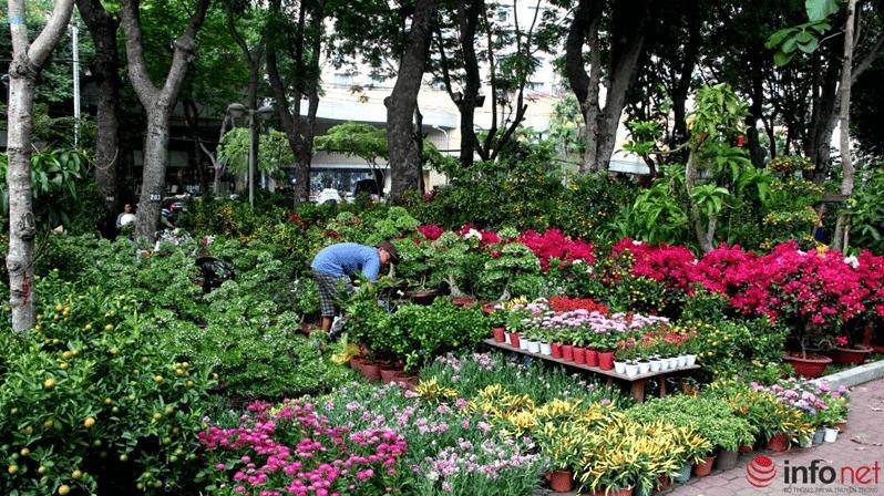 Khắp công viên ngập tràn cây, hoa dịp Tết Nguyên Đán