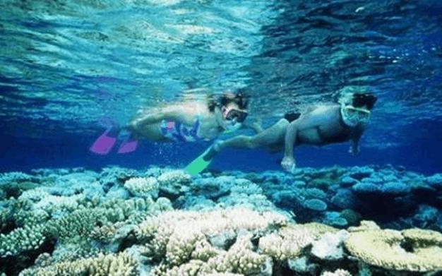 Lặn biển ngắm san hô cực thú vị ở Côn Đảo
